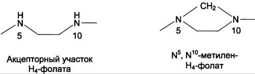 Обмен отдельных аминокислот - ОБМЕН И ФУНКЦИИ АМИНОКИСЛОТ - БИОХИМИЯ УЧЕБНИК ДЛЯ ВУЗОВ - Е. С. Северина