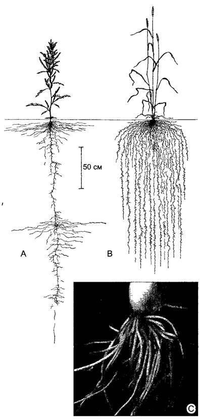 Ботаника лист зарождение и развитие листа части листа гетерофилия